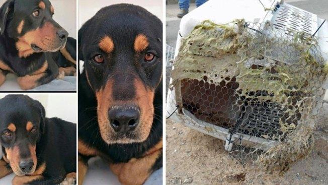Rescatan a perro de morir ahogado con todo y jaula