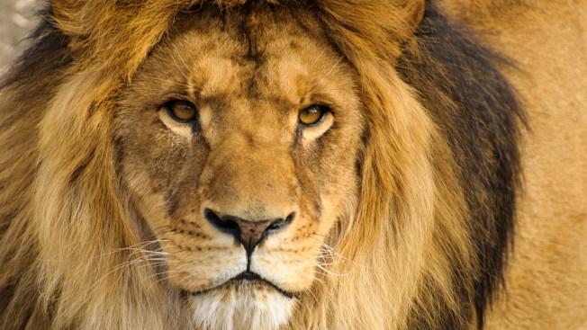 Reabre consultorio del dentista que mató a león