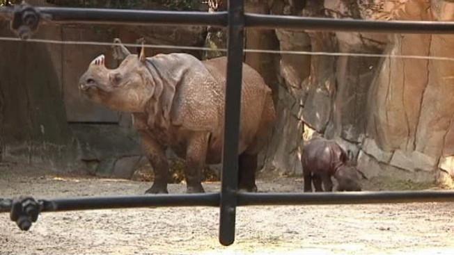 Beba rinoceronte busca nombre