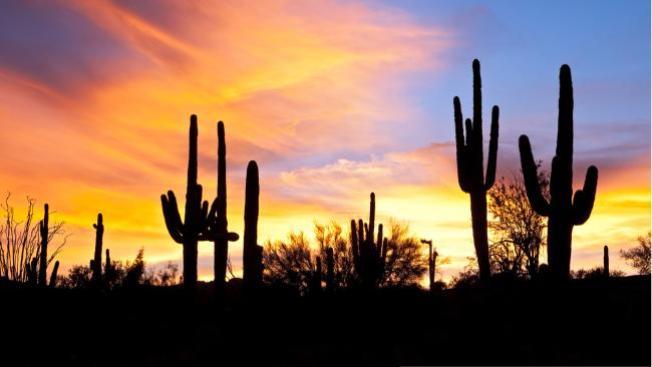 Cactus hiere a obrero