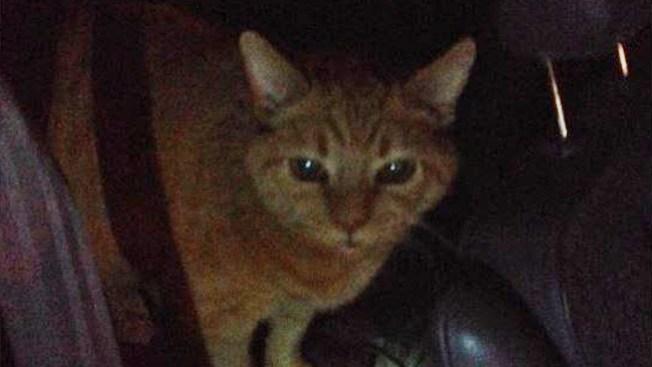 Súper Gato salva a sus dueños en Tucson
