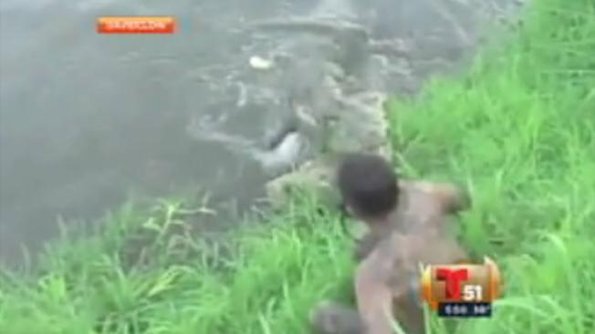 Atacado por cocodrilo hambriento
