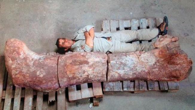 Dinosaurio rompe records de tamaño