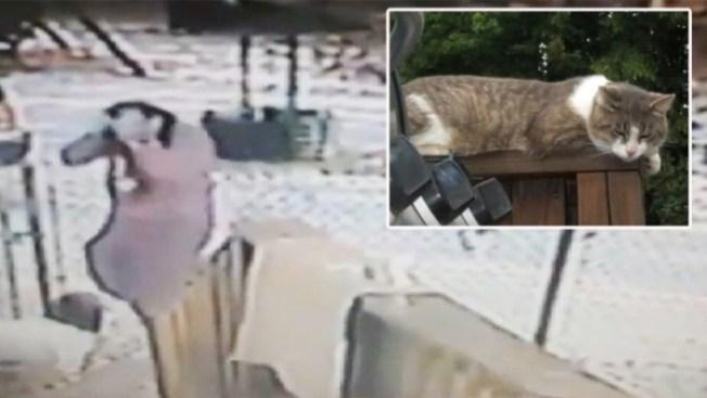 Mujer defiende al gato que la atacó