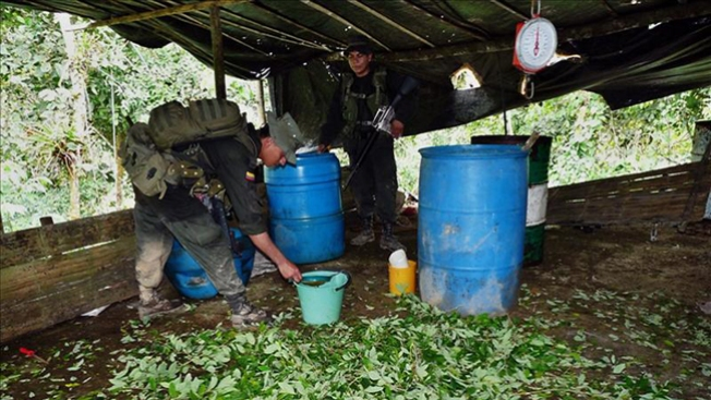 Hallan primer cultivo de coca en México