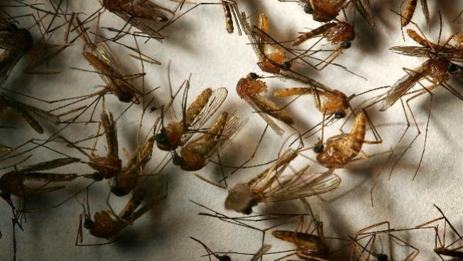 Primer caso del virus del Nilo