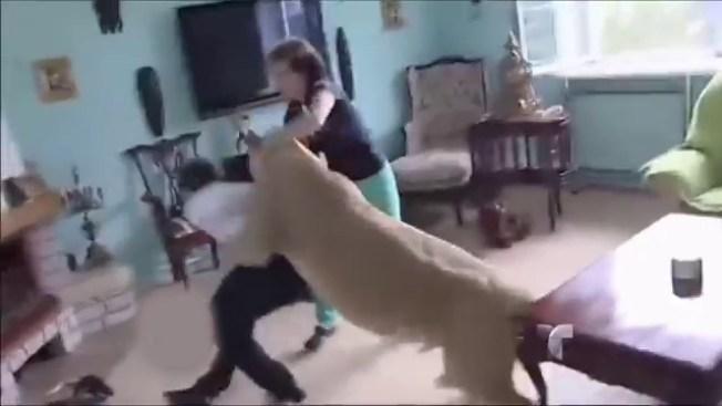 """Leona """"doméstica"""" ataca sin piedad"""