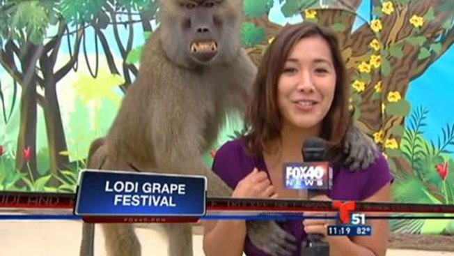 Mono grosero agarra seno de reportera