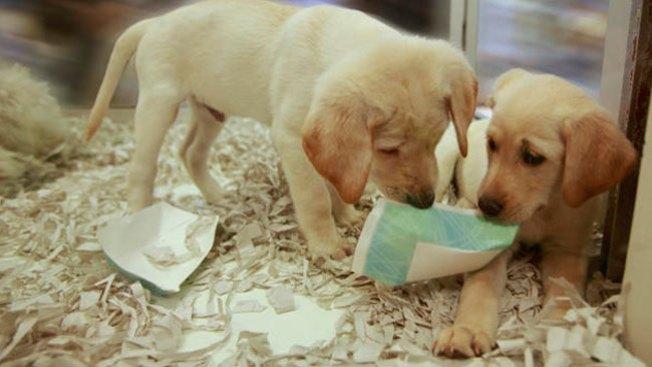 Furor por muerte masiva de perros
