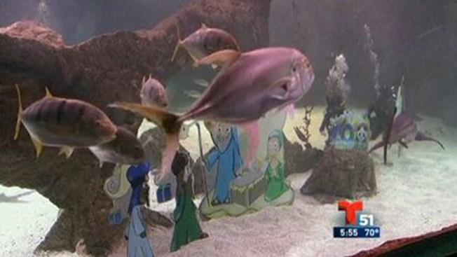 Nacimiento bajo el agua, entre tiburones