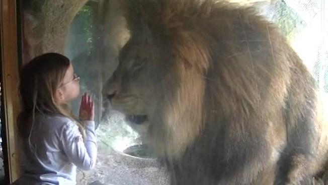 Niña puede más que león