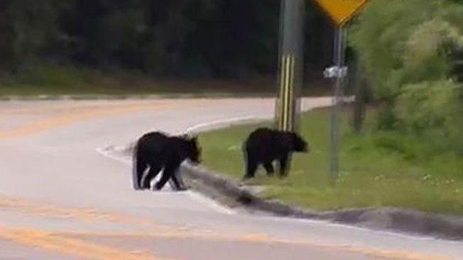 Botaba la basura y se le abalanzó un oso