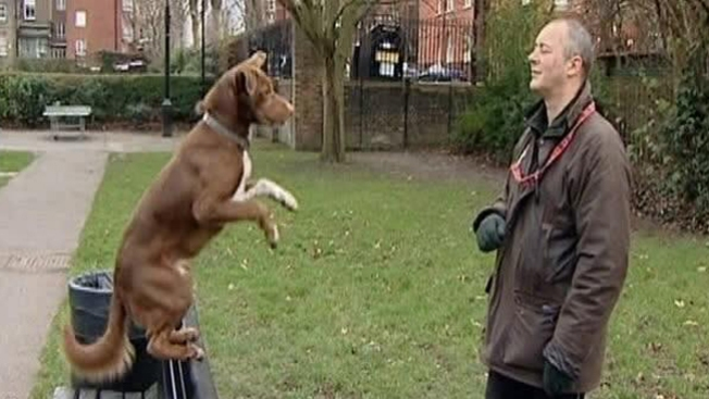 Perro acróbata maravilla a todos