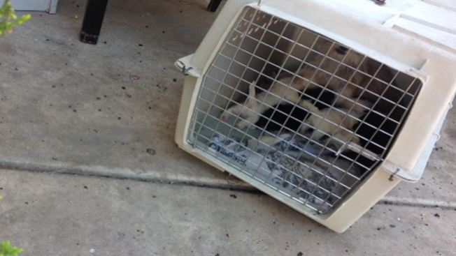 Bomberos rescatan mascotas de incendio