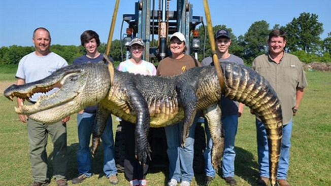 Capturan gigantesco lagarto en un río