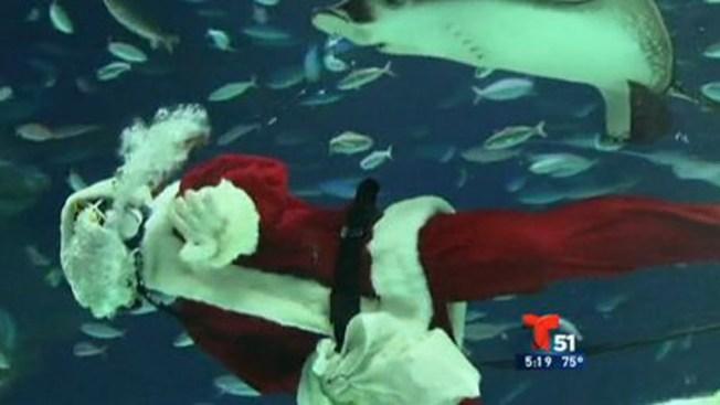 Santa Claus nada entre tiburones
