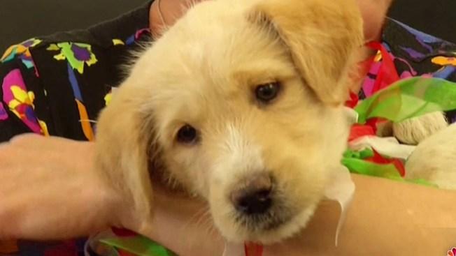Adoptan a perrito rescatado de drenaje