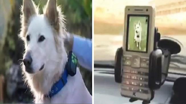 Nueva frontera: perros usarán sensores