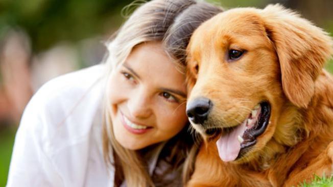 Terapia canina para estudiantes