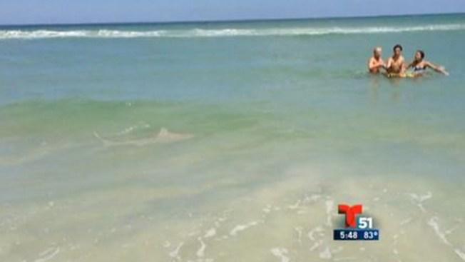 Bañistas asediados por tiburones