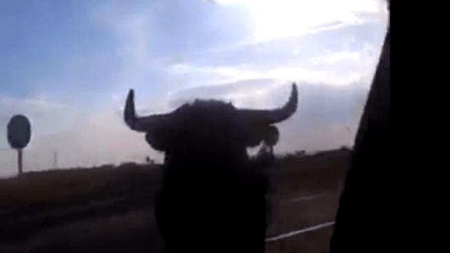 Un toro desata el pánico en carretera
