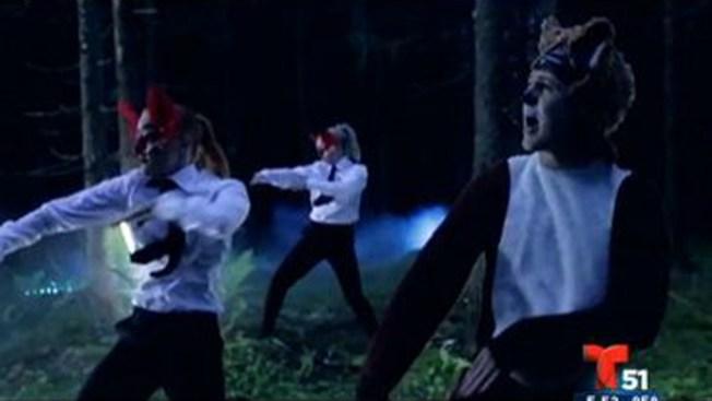 Video: El baile del zorro