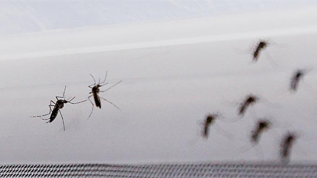 CDC: primera muerte asociada al Zika en EEUU continental