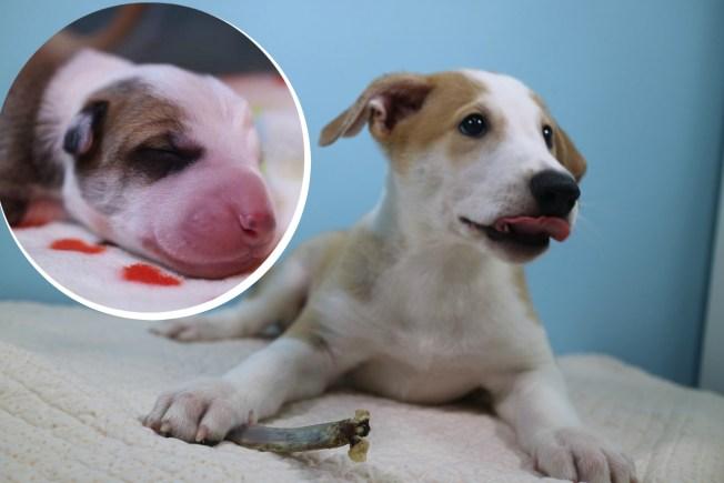 Pagan hasta $100,000 para clonar a su perro muerto