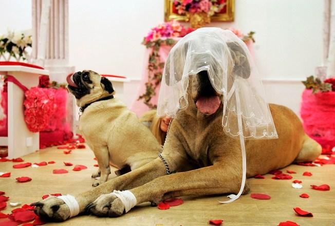 Laboratorio busca determinar como piensan los perros